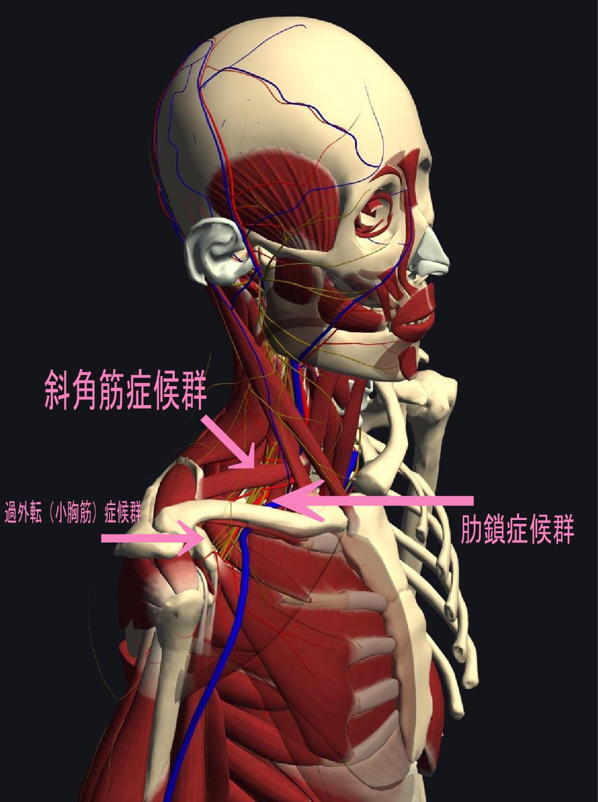 東伏見、西東京市で首の痛み、肩の痛み、腕の痛みでお悩みの方