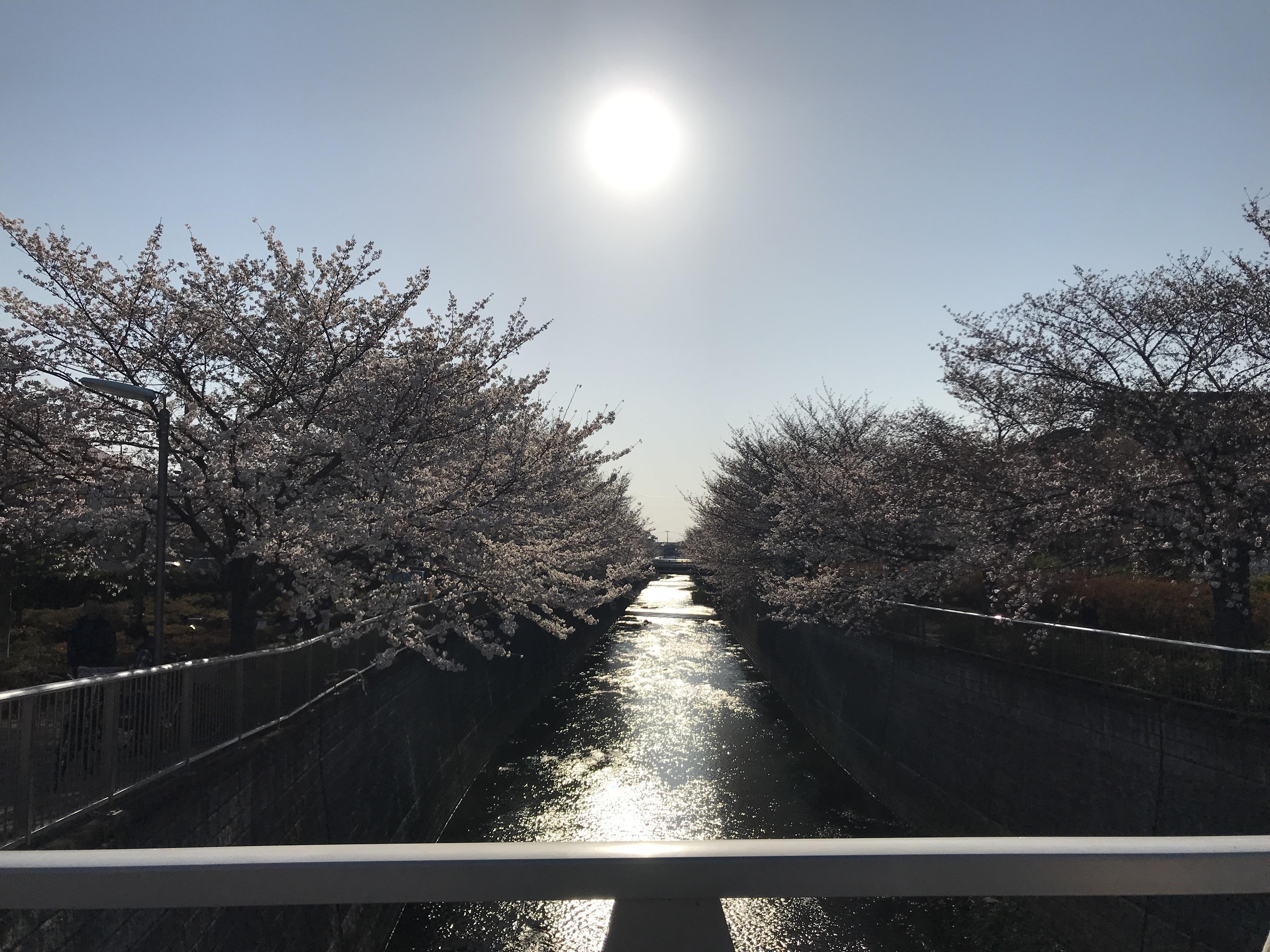 2018「桜」石神井川